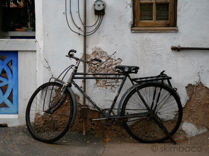 animal-kingdom-bike