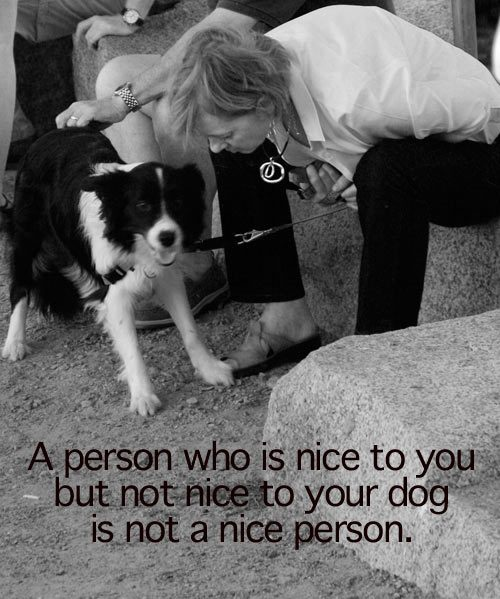 Inspirational Pet Quotes: Inspirational Quote Of The Week: Nice People