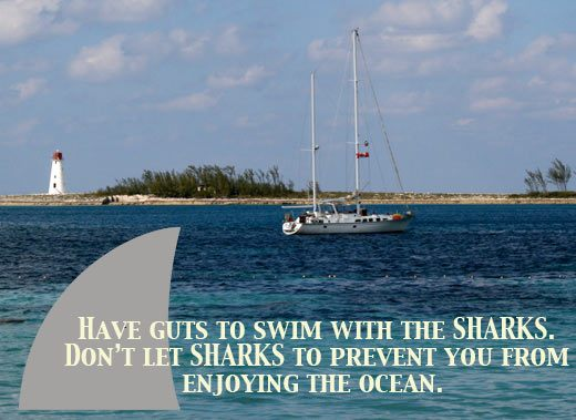Inspirational Shark Quote Skimbaco Lifestyle Online