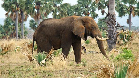 Meeting elephants on a game safari in Uganda I @SatuVW I Destination Unknown