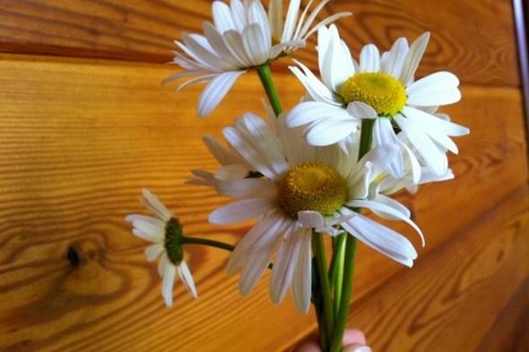Flowers for Mom I @SatuVW I Destination Unknown