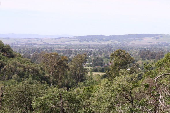 View from top of the hill at Bartholomew Park Winery Trail