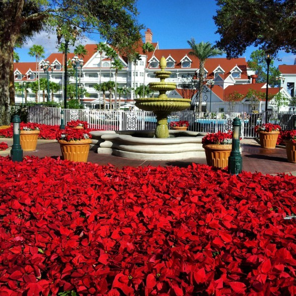Disney's  Grand Floridian at Christmas