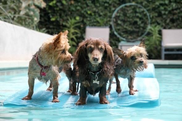 Rafting Doggies