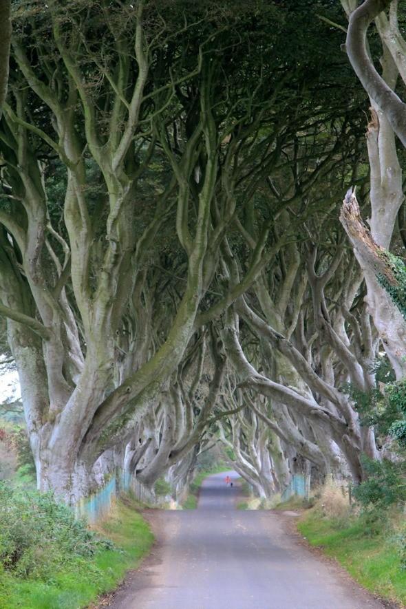 The Dark Hedges in Northern Ireland I @SatuVW I Destination Unknown