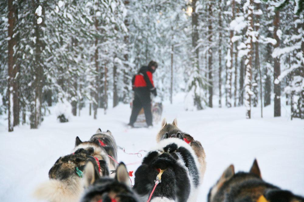 Magic of Lapland in 48 hours in Rovaniemi, Finland