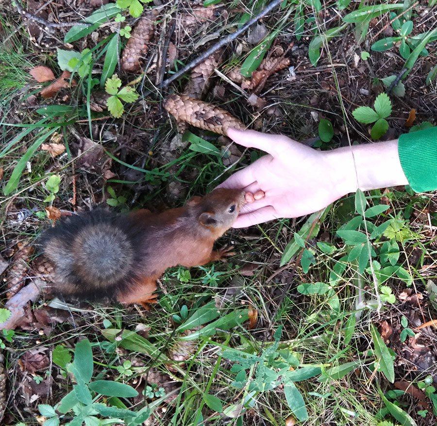 feeding squirrels in forest