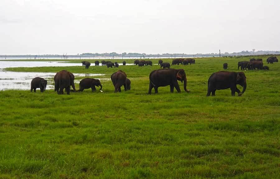 sri-lanka-elephant-gathering