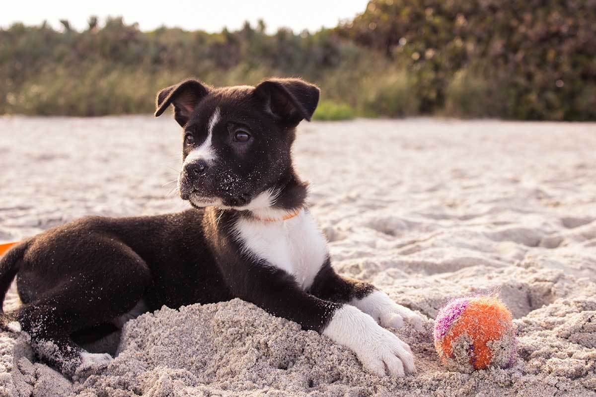 Life lessons from a dog | Skimbaco Lifestyle | online magazine