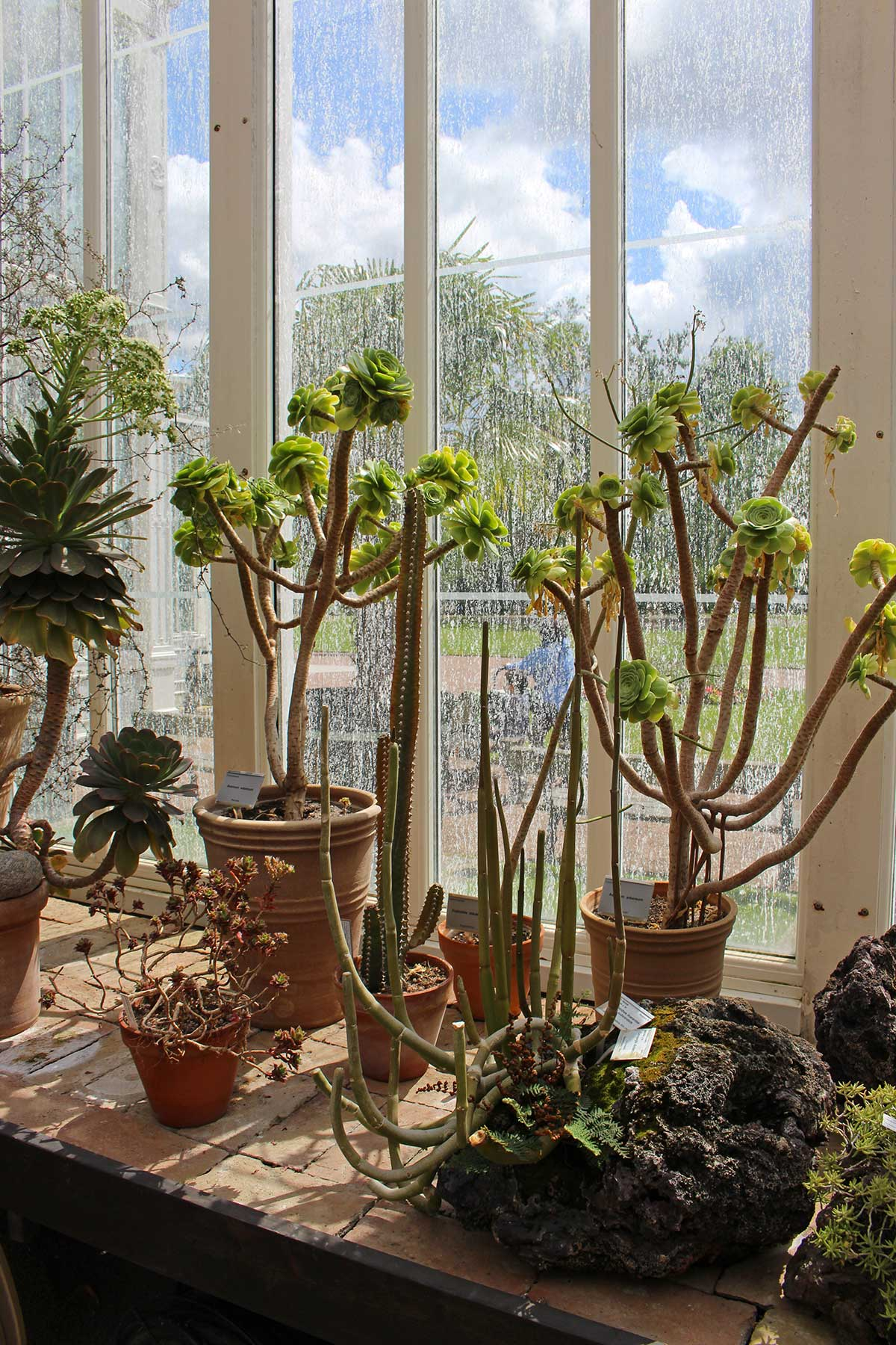 Succulents in Palmhouse, Gothenburg, Sweden