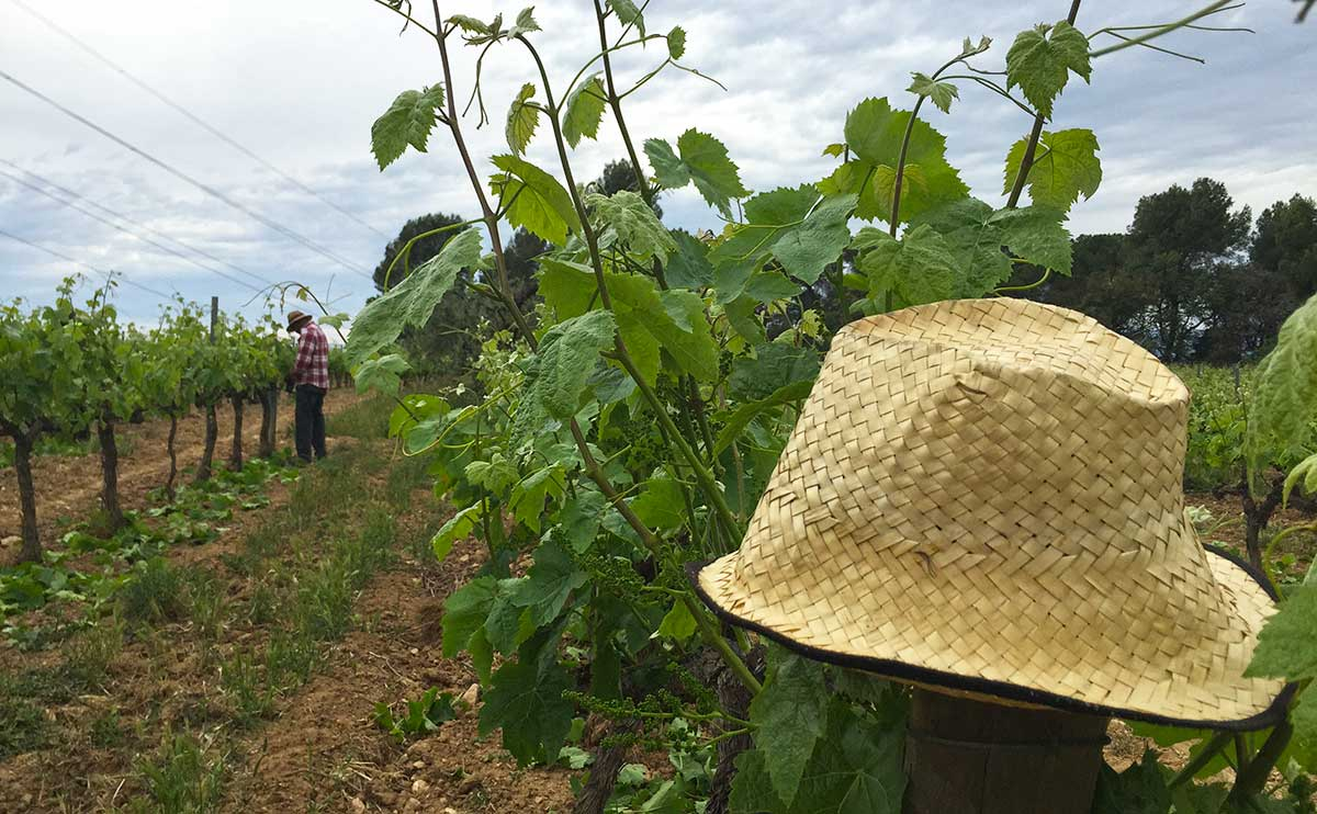 Wine travel to Spain. Vineyards in Catalonia.